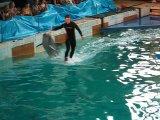 дельфинарий на Крестовском острове