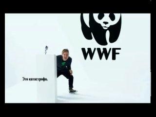 Давайте защитим амурского тигра вместе с WWF и Ильей Лагутенко