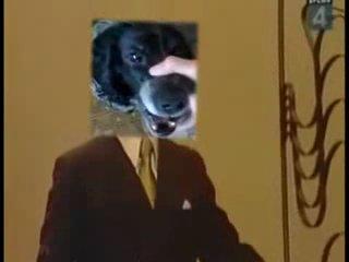 все помнят эту собаку бэбэ(трололо)