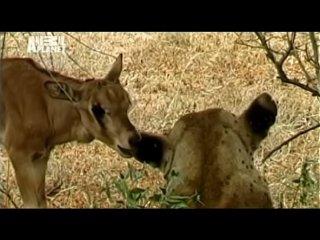 Animal Planet: