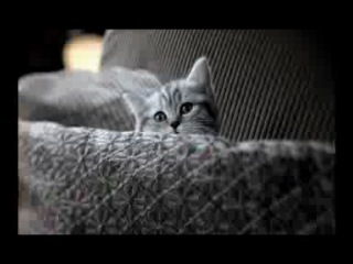 вискас для кошенят