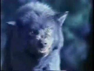 черный волк это зло
