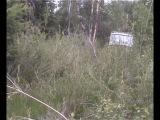 В поисках орла-карлика (Aquila pennata)