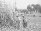 Самые громкие преступления ХХ-го века: Убийство Че Гевары