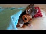 Кот обнимает мишку
