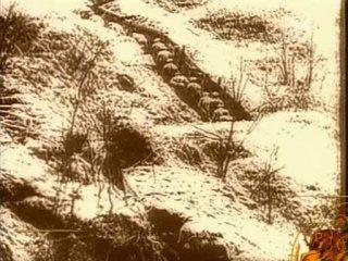Исторические хроники с Николаем Сванидзе: Александр Блок (1906 год)