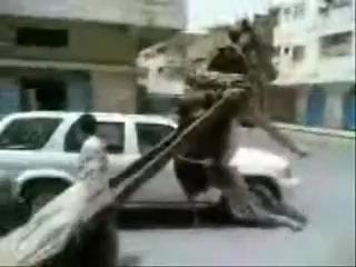перегруз ишака!!!