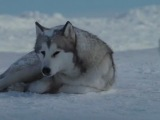 """Клип  из фильма """" Белый плен"""" Поет Gregorian - Moment of Peace"""