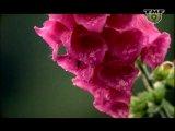 Armin Van Buuren (Perpetuous Dreamer) - The Sound of goodbye