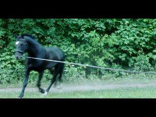 Лошадь породы русский рысак.