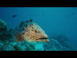 На глубине морской 3D /  Under the Sea 3D /  2009 / Документальный фильм / HD 720