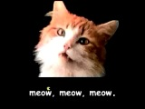 Meow Meow Mix Song