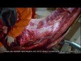 Вскрытие жирафа. Ричард Докинз опровергает сотворение Богом человека