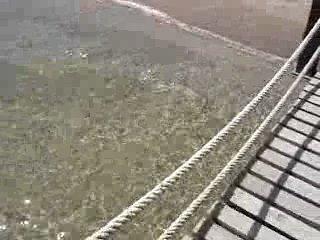 Рыба-игла охотится