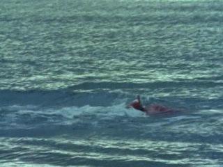 Тайны Морских глубин - Волшебный мир дельфинов/ (BBC)