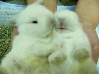 Карликовые кролики (Милые)