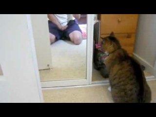 Приколы с кошками.Кот ругается с  отражением)