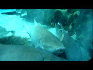 Донная акула - она же