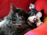 дружба на всегда собаки и кошки