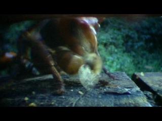 BBC: Мир природы (17 серия) -Будда, пчелы и королева гигантских шершней
