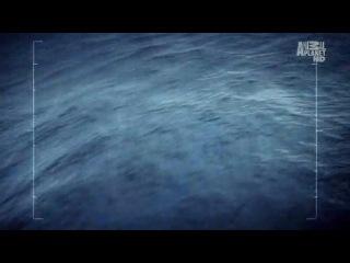 Ролик программы Sea Shepherds (Китовые войны)