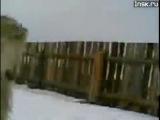 Баран в атаке :)))
