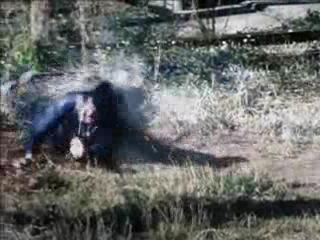 Сумасшедшая езда 2011 фильм [CAMRip]