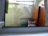 Медленный кот или подглядывание в женскую баню)