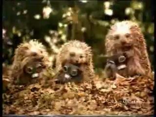 Смешная реклама: Ёжики и мерседес » Freewka.com - Смотреть онлайн в хорощем качестве