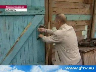 В Ленинградской области обнаружена конюшня с полумертвыми лошадьми. Первый канал. Новости.