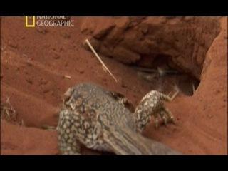 Король ящериц / Lizard Kings (2009)