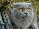 Говорящий кот Кузя гад ХаХаТун club18989201