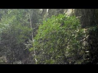 BBC. Тропический рай Борнео. 2007 3серия