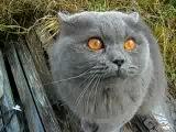 Кот говорит слово гад=D