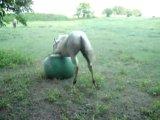 Лошадка решила что она щенок