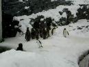 Весёлый пингви