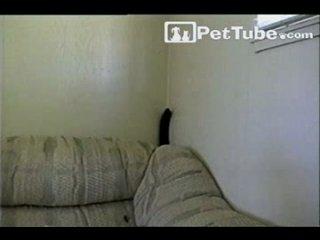 Эти забавные кошки (подборка)4