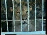 Сценакардия - Перед животными мы все виноваты