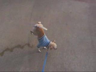 Собака писиет вверх тормашками