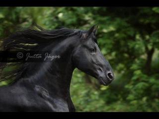 Ещё один клип про лошадей...!