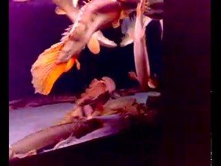 полиптерус(рыба дракон)