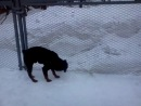 Прыжок через 2 метра Бурана - служебная собака В/ч 3792