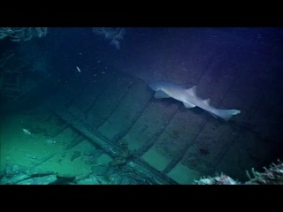 ВВС. Дикие Карибы. Фильм 2. Рифы и затонувшие корабли