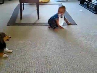 Щенок колли играет с ребенком
