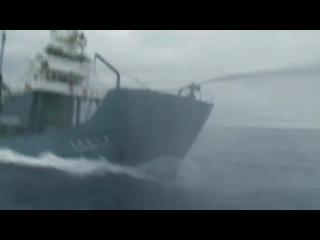 Whale Wars Китовые Войны [HD]