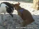 Собака ананист
