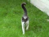 Нападение кошки на человека... Шокирующее видео...