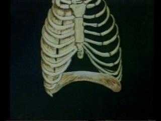 Физиология дыхания - краткий курс