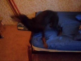 Если с Доберманом не гулять или как взборонить кровать за 1 мин. =)))