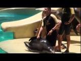 LORA Park веселые моржи